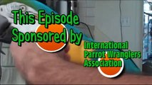 Training Your Parrot: Handling Macaw Beaks