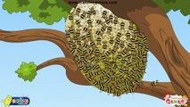 Animals' Homes, Birds' Nests - for Kids