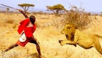 Man vs Lions  Maasai Men Stealing Lions Food Without a Fight