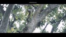 EXO - Kai & D.O. / Kaisoo | Save And Sound (Fan Made)
