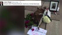 Dead raccoon mourned in Toronto and takes over Twitter