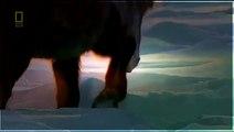 National Geographic   National Geographic Animals Documentary HD - Wild Animal Amazon