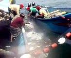 صيد سمك الصوفع وبلغت الكمية المصطادة 16000 حوت قبالة سواحل ابين