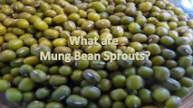 Growing Mung Bean Sprouts for Raw Sprout Nutrients