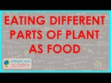 551.Class VI - CBSE, ICSE, NCERT -  Food - Eating different parts of plant as food
