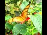 borboletas-  trabalho de biologia