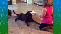 Compilation de chiens marrant : FAIL, gamelles, chien débiles...