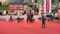 Dog rescue videos World Dog Show New   Group VI Judging