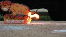Bad dog - le feu d'artifice qui fait caca au lieu d'exploser