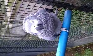 Jasper African Grey at the Tropical Butterfly Ho
