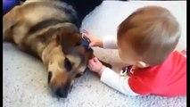 Animali e bambini. Video divertente di Bambini, cani, gatti