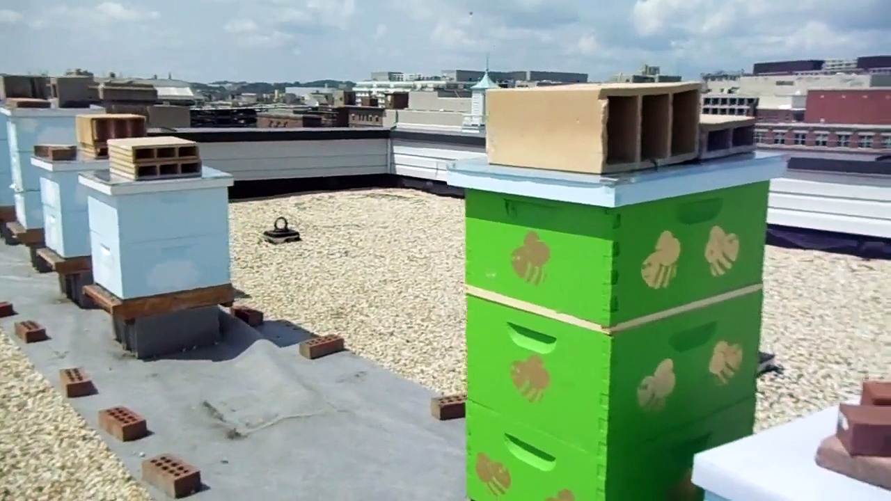 Urban Beekeeping: # 25 Apiary Visit! To the roof to explain the plan of switching hive bodies etc.