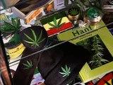 Die Bekiffte Republik - Cannabis: Illegal, Legal, egal? P.3