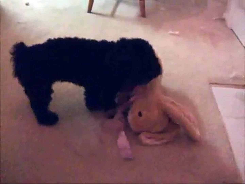 FUNNY!  Dog Humping a Stuffed Animal Bunny Rabbit