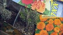 Welche Blumen helfen Bienen? Der UNKRAUT-Test | UNKRAUT | Bayerisches Fernsehen
