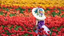 Spring Waltz and Tulips * Paul de Sennville & Richard Clayderman _ Mariage d'amour *