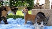 Animais de estimação engraçado e bonito que faz o divertimento - Gatos bonitos e cães Compilation