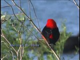 Bird Watchers-Closing Credits