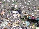 Montargis  pollution environnement noyade oiseau englué dans la pollution