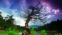 تلاوة رائعة من سورة يس للشيخ عبدالولي الأركاني مع أجمل المناظر الطبيعية الساحرة HD
