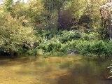 Tennessee Walking Horse Gelding SOLD crossing river