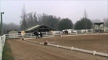 Lily Walk Trot Canter Dressage Test Feb2014