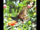 Katia Cardenal - Mariposa de alas rotas
