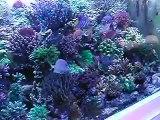reef tank Aquarium recifal