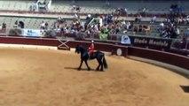 2012 - Demonstration d'un des chevaux frisons des écuries de la Bouriasse