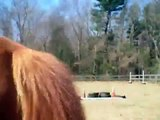 First Time Horse Jumping Tire Jump