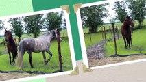 Paarden Instinct - Het ABC van de hersenen uitgelegd nl