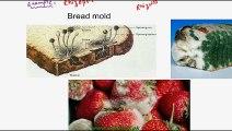 FSc Biology Book1, CH 8, LEC 5; Classification of Fungi - Zygomycota and Ascomycota