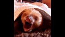 Best Vine    Singing Banana   Funny kids  babies  cats  animals