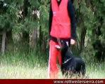 Obediencia RCI/Schutzhund/VPG rottweiler