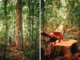 Chico Mendes y la Amazonia.wmv