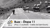 Buzz du jour / Buzz of the day - Étape 11 (Pau > Cauterets - Vallée de Saint-Savin) - Tour de France 2015