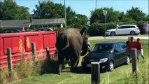 Elefante maltratado se revolta, destrói carro e fere turistas; veja vídeo