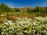 Wines of Chile ~ The Natural Choice