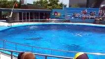 Spectacle des dauphins au zoo de Barcelone