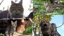 Cats&DogsTV - УДИВИТЕЛЬНЫЙ МИР КОШЕК - ПОЛОСАТЫЙ КОТ ВАСЬКА / TABBY CAT VASKA