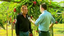 Estância das Frutas (Programa: Globo Rural / Globo)