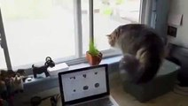 Funny videos - Funny cats - Funny animals - Cute cats compilation - Best cat vines