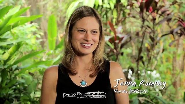 Australia's National Landscapes Nature Series - Great Barrier Reef - Jenna Rumney