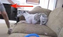 Voici ce qui se passe quand vous laissez votre chien a un Garde-chien...
