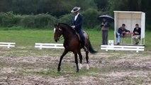 Eduardo Almeida.Xeique. Working Equitation dressage test. winner. golega2011