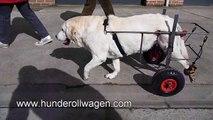 hunderolli - Hunde rollstuhl - Hunderollstuhl, gelähmte Hunde, Rollstuhl, Tiere