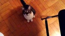 Funny Cat Vines Compilation - Funny Cats - Funny Cats Fails - Funny Pranks - Vines - Haha