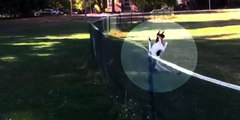 "Dog's first ""front flip"" flies over fence"