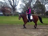 Canter. Nervous hot horse. Staying on the bit/ connected for the 2nd time.  S4  Horse training