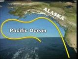 Migraciones Trans-oceánicas: Cap. 24 - El Salmón
